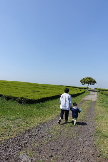 春采蕨菜,夏入渊外川,来济州可好?