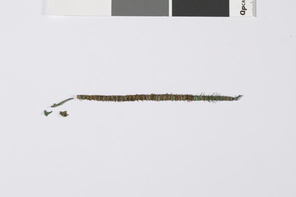 무령왕릉에서 발견된 은어뼈