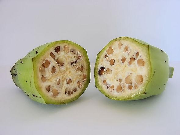 야생 바나나는 크고 딱딱한 씨가 가득 차 식용으로 먹기 힘들다. 사진 출처 : 위키미디어