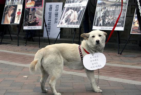 The Dog Meat Debate In Korea National