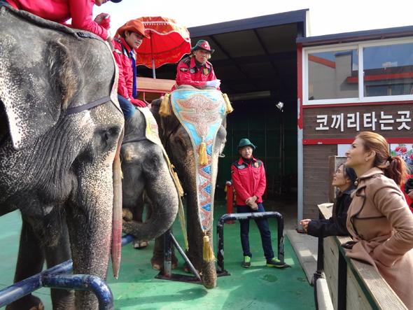 12일 오전 제주도 서귀포시의 한 코끼리 공연업체를 찾은 타이 코끼리보호 운동가 렉(왼쪽 키 작은 여성)과 영화배우 보가 라오스에서 온 조련사들과 이야기를 나누고 있다.