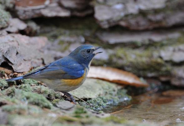Birds like pools : Arts & Entertainment : News : The Hankyoreh