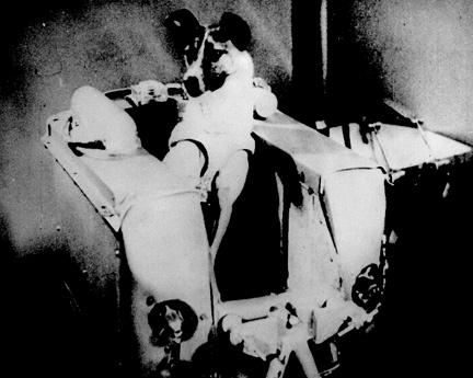 미소 냉전이 쏘아올린 '떠돌이 개'의 죽음…라이카와 '우주 개'들 : 환경 : 사회 : 뉴스 : 한겨레