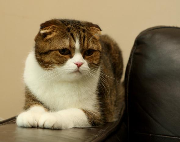 같은 듯 다른 고양이와 개의 습성 : 과학 : 미래&과학 : 뉴스 : 한겨레