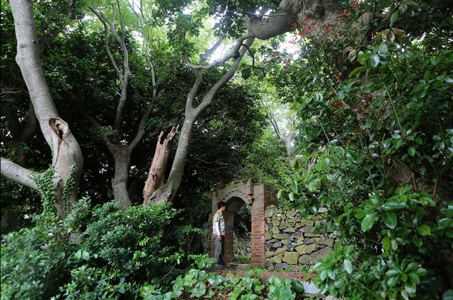 안도포구의 당산숲.