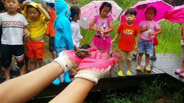 비가 내린 지난 27일 전북 전주시 삼천도서관 뒤 맹꽁이놀이터에서 전북환경운동연합 어린이 회원들이 맹꽁이의 생태와 특징을 살펴보고 있다.  전북환경운동연합 제공