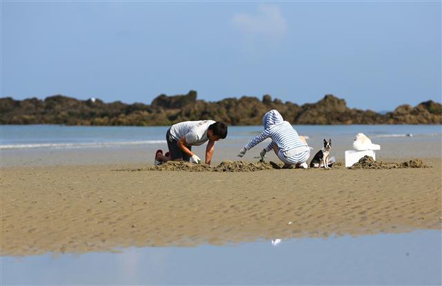 진너머해변에서 바지락·맛 채취에 빠진 한 쌍. 사진 이병학 선임기자