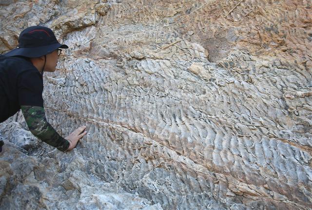 대청도 농여해변 바위절벽의 물살무늬 화석. 사진 이병학 선임기자