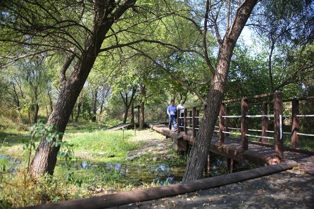 양평군 운심리의 한강생태학습장 숲길. 사진 이병학 선임기자