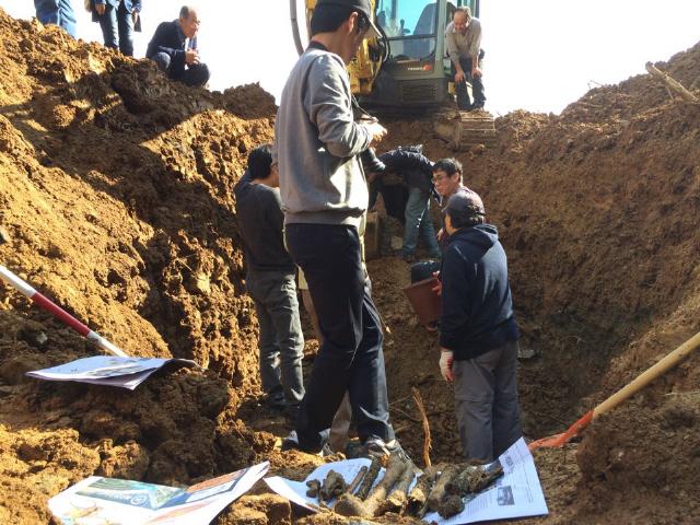 발굴단원들이 수습된 유해를 한켠에 모으면서 호미질과 삽질로 시굴작업을 이어가고 있다. 사진 오승훈 기자