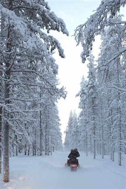 핀란드의 들판엔 무수한 호수들과 전나무·가문비나무 등 침엽수림이 빼곡히 깔려 있다. 눈 덮인 침엽수림 사이로 2인승 스노모빌이 질주하고 있다. 25㎞ 스노모빌 운전체험 코스 중 한 구간이다.  사진 이병학 선임기자