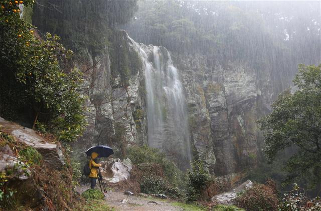 폭우 속에 찾아간 서귀포시 강정동의 엉또폭포. 비가 와야 제 모습을 보여준다. 사진 이병학 선임기자