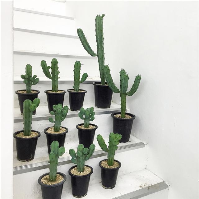 선인장 같은 다육식물은 관리가 편해 초보자에게 적합하다.  슬로우파마씨 제공