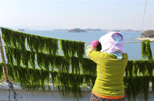 경남 남해도 들머리인 남해대교 옆 노량마을 도로변에서 주민이 수확한 파래를 널고 있다. 사진 이병학 선임기자