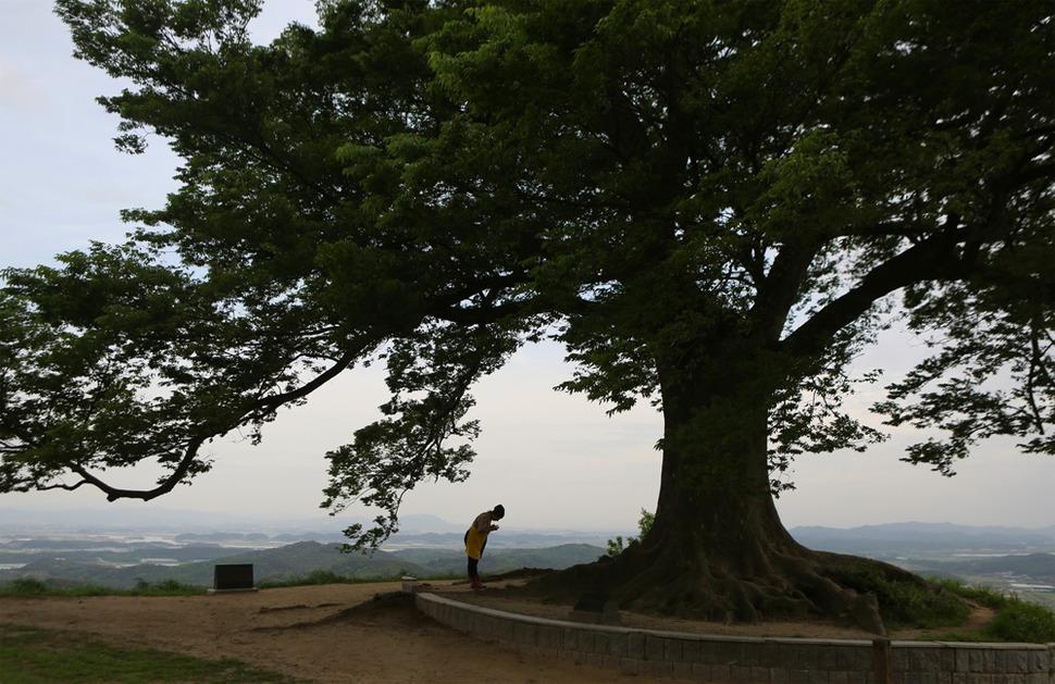 부여 성흥산성 성곽 위의 400살 난 느티나무 밑에서 한 여성이 손을 모아 기도하고 있다. 사진 이병학 선임기자