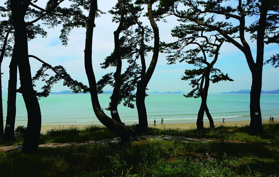 관매도 솔숲 사이로 바라본 관매해변. 사진 이병학 선임기자