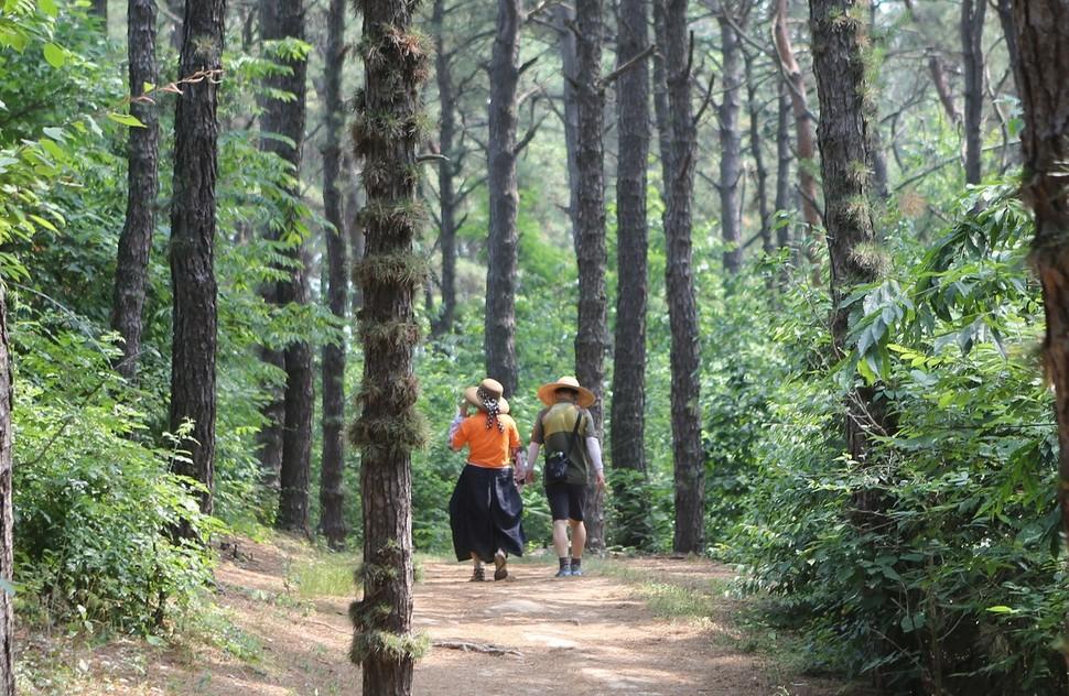 탄금대공원 숲길.