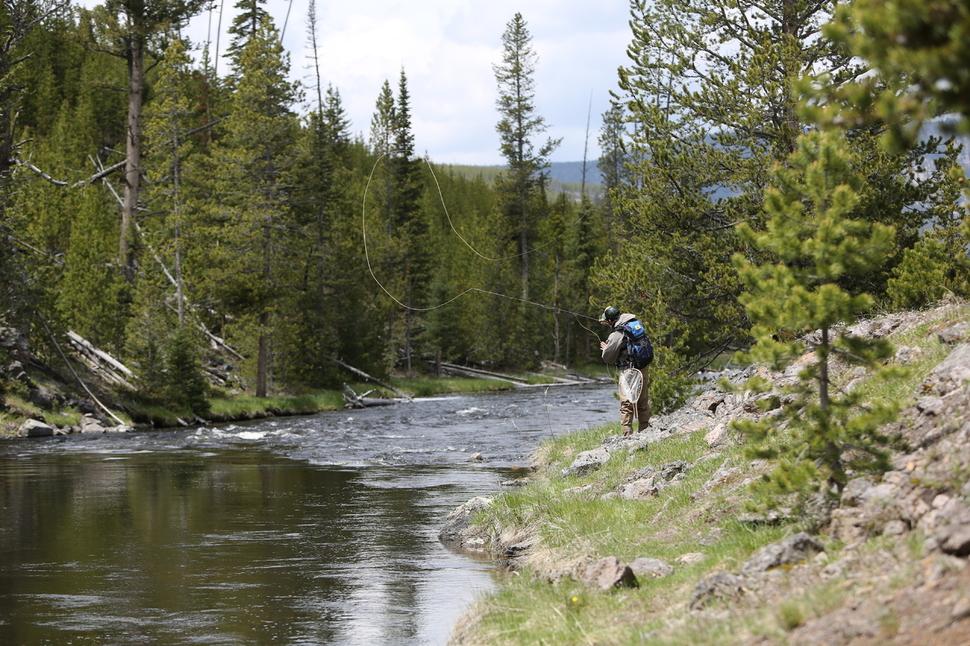 옐로스톤 강 지류의 송어낚시꾼.
