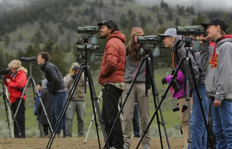 라마 계곡에서 늑대를 관찰하고 사진 찍기 위해 기다리는 관광객과 사진가들.