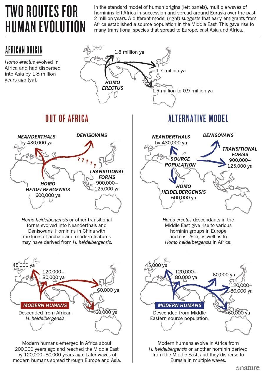 다시 쓰는 진화론, 주인공은 아시아?