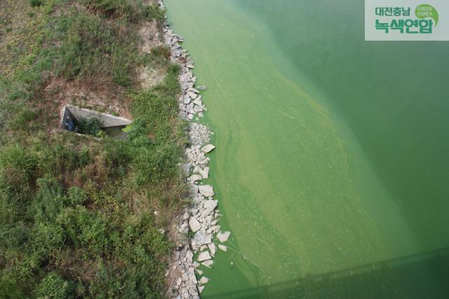 지난 18일 웅포대교 인근 금강의 모습. 여름철 낚시꾼들이 가득했던 웅포대교는 이제 물고기도 사라지고 녹조만 가득하다. 대전충남녹색연합 제공