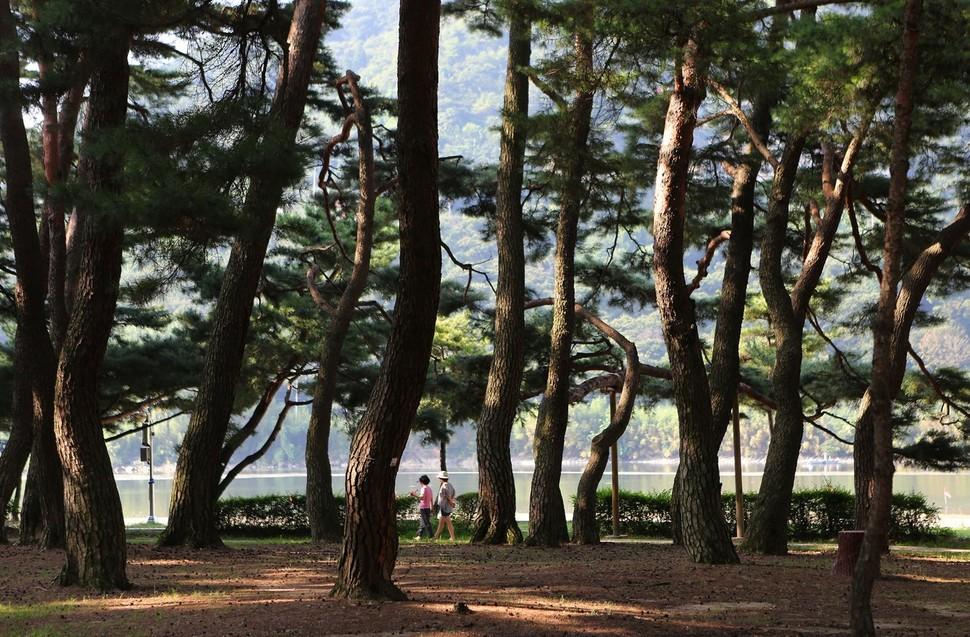 섬진강변 하동송림은 18세기 중반 조성된 방풍림이다. 주민들의 산책·운동 공간으로 자리잡았다.