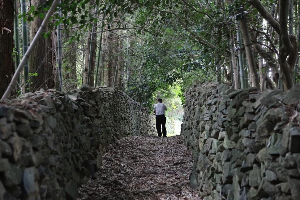 사자산 자락 기산마을의 대나무숲·편백나무숲 사이로 난 돌담길.