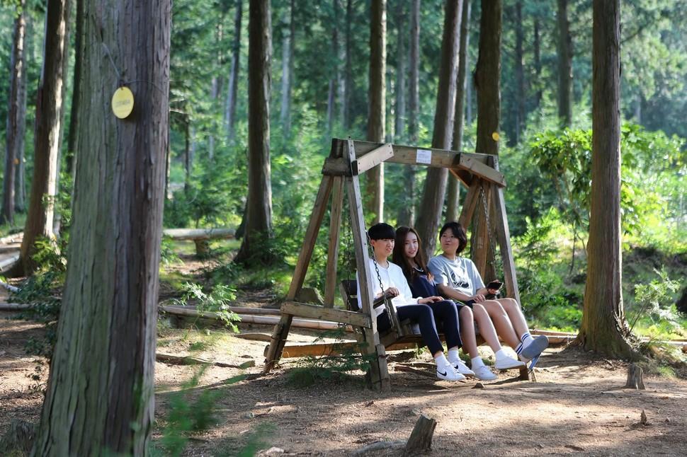 장흥 억불산의 편백나무숲(우드랜드) 그네의자에 앉아 쉬는 탐방객들.