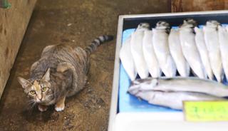 '성복수산'의 생선 지키는 고양이 '가을'.