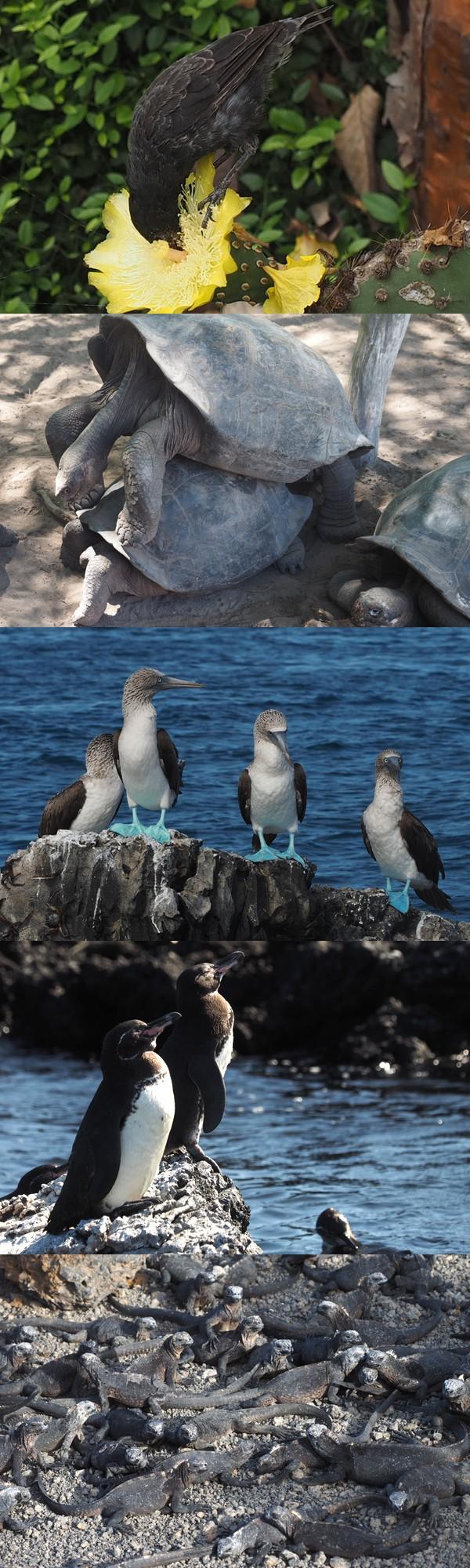 새도 바다사자도 가까이 다가가도 본체만체 : 환경 : 사회 : 뉴스 : 한겨레
