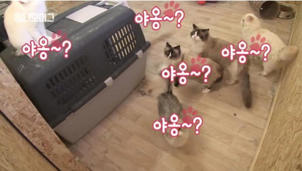 지난 1월 정유라씨가 덴마크 현지에서 체포될 당시 정씨의 거주지에서 발견된 고양이들. SBS 비디오머그 화면 갈무리