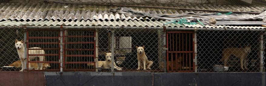 Corea del sur el debate sobre el consumo de carne de perro quema de nuevo ... - La Hankyoreh 6