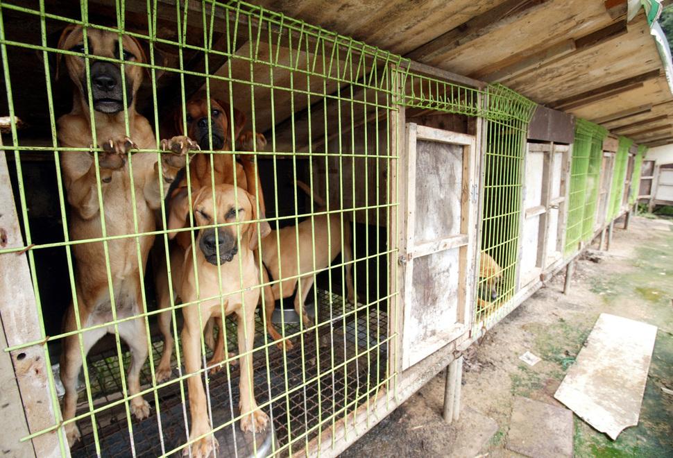 Corea del sur el debate sobre el consumo de carne de perro quema de nuevo ... - La Hankyoreh 1