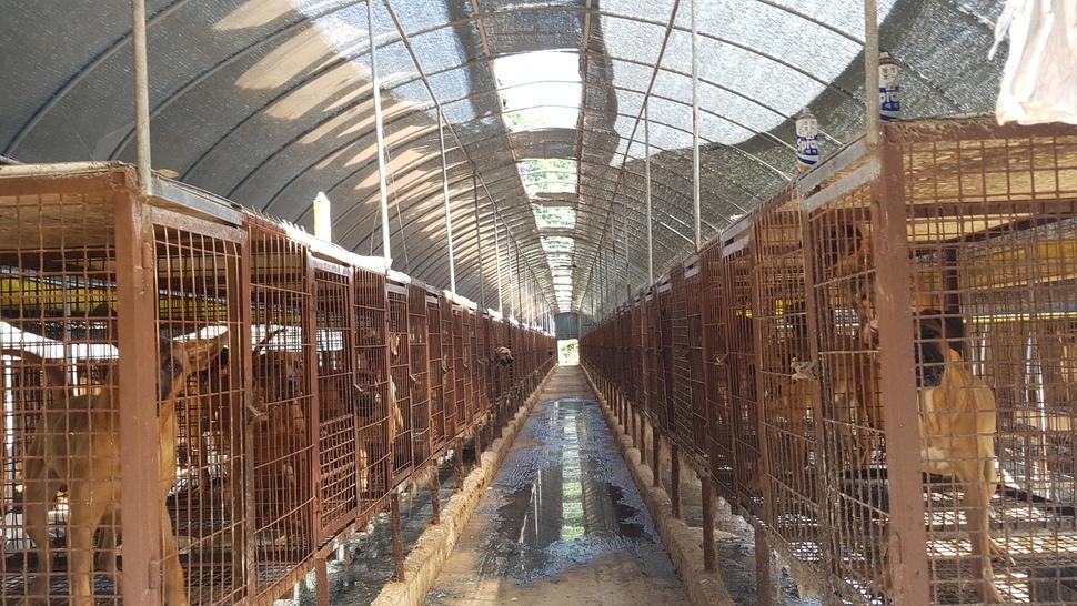 공장식 개농장에 늘어선 뜬장 안에서 개들이 사육되고 있다. 도살되기 전까지 음식물쓰레기와 닭 머리 등을 먹으며 지낸다. <한겨레> 자료사진