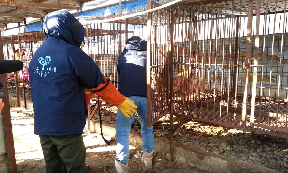 동물단체인 동물자유연대 활동가들이 경기 여주의 개농장에서 식용견을 구조하고 있다.  동물자유연대 제공