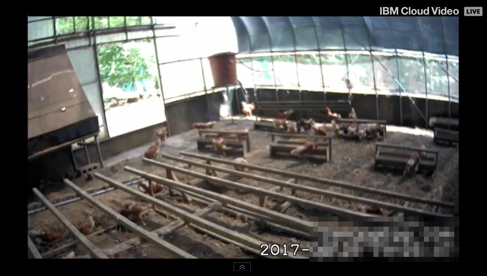 일부 농장은 양계장의 모습을 24시간 볼 수 있게 소비자에게 CCTV영상을 제공하고 있다.