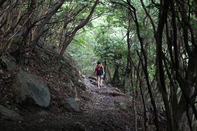 비진도 바깥섬 동백나무숲길.