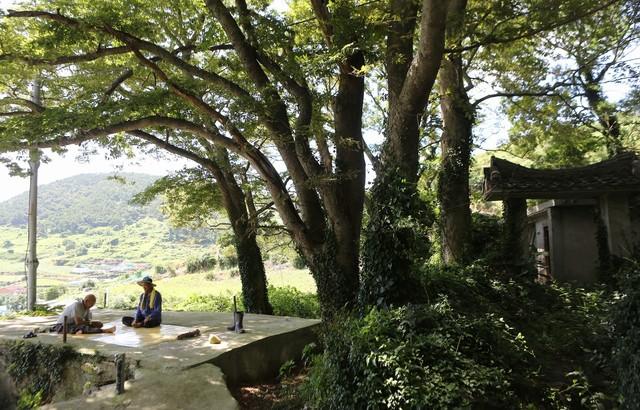 연도(소리도) 당산숲.