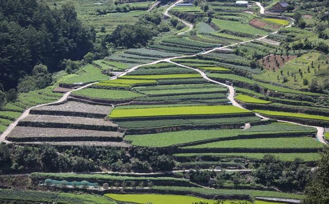 금대암 오르는 길에 볼 수 있는 도마마을 다랭이논.