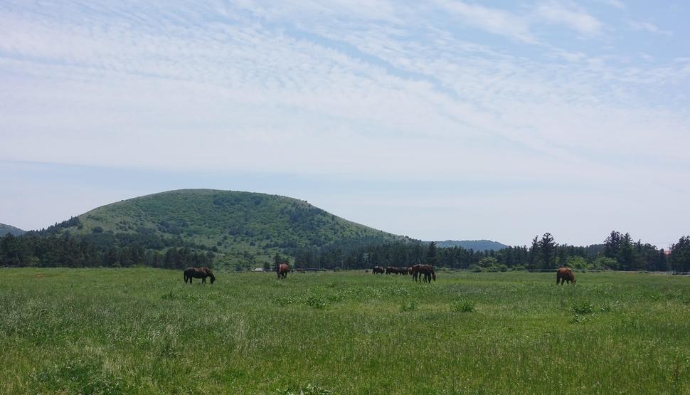 정물오름을 배경으로 이시돌목장에서 말들이 풀을 뜯고 있는 모습.