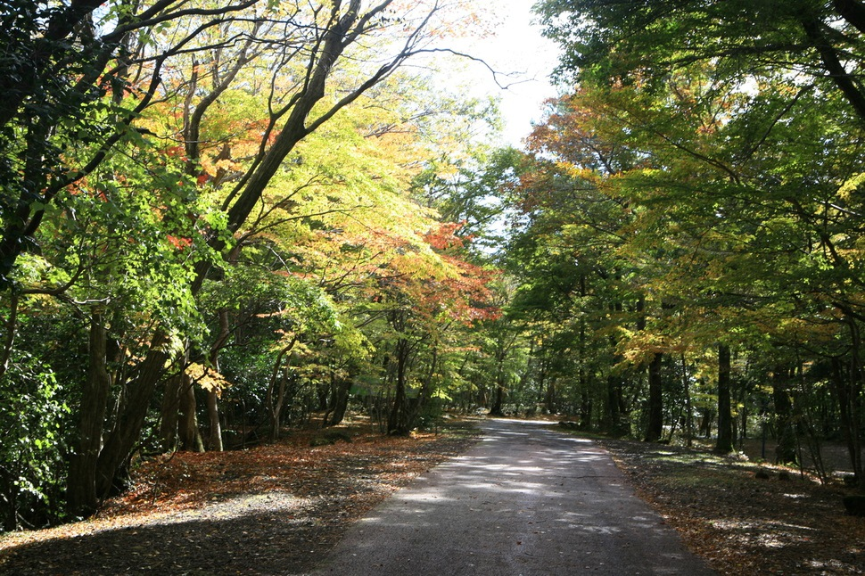 산소 질이 가장 좋다는 제주 숲속 캠핑지 5곳 : 제주엔 : 문화 : 뉴스 : 한겨레