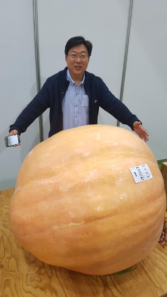 올해 박과채소 왕중왕 선발대회에서 장원한 무게 163㎏, 둘레 270㎝, 높이 145㎝짜리 대형 호박.