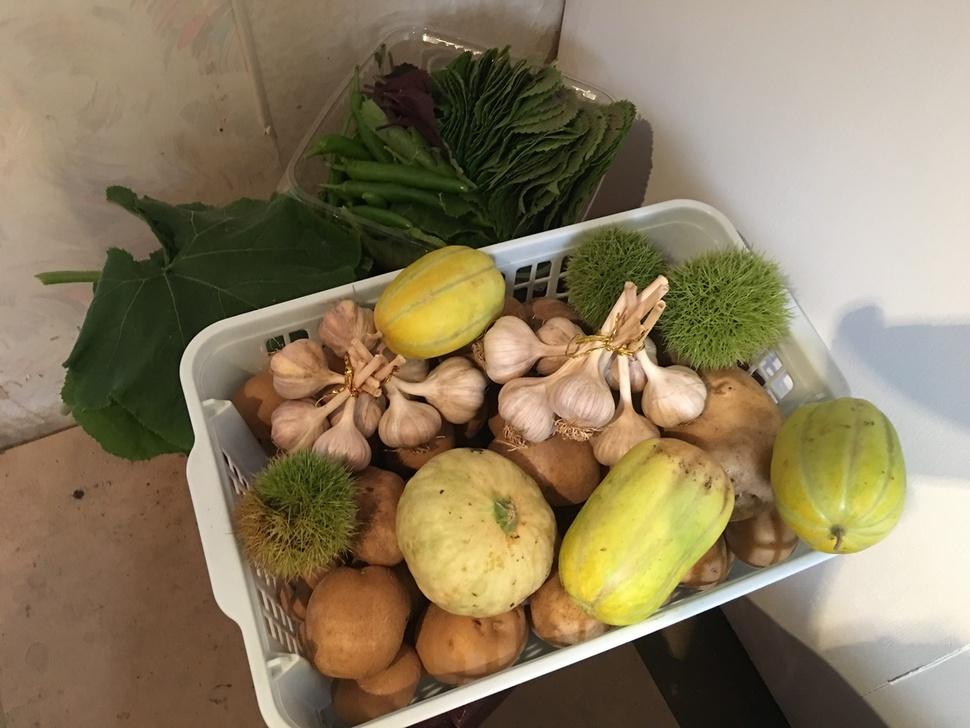 '세모아 도시농부' 장터에 내놓은 선유아리농장의 채소들.