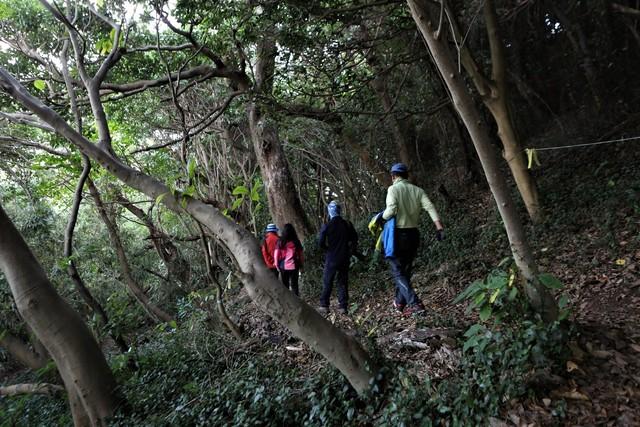 고흥 쑥섬(애도)의 당숲. 이달 초 산림청·생명의숲이 보전해야 할 아름다운 숲으로 선정했다.