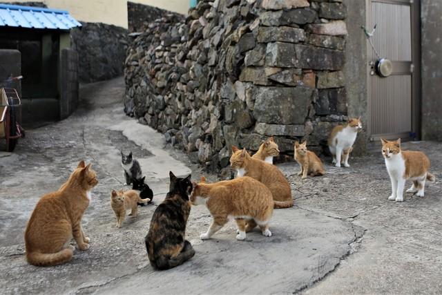 고흥 쑥섬의 고양이들.
