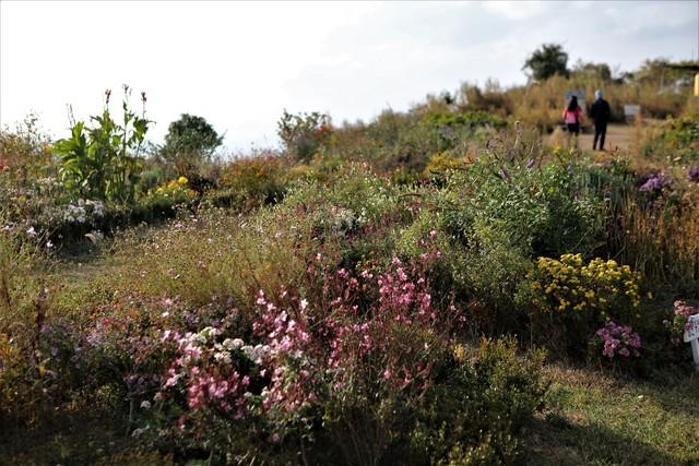 고흥 쑥섬의 능선 꽃밭.