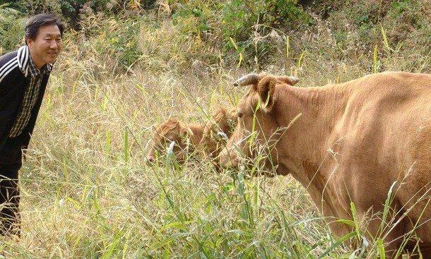 횡성에는 먹고 싸기만 하면 되는 '행복한 소'가 있다?