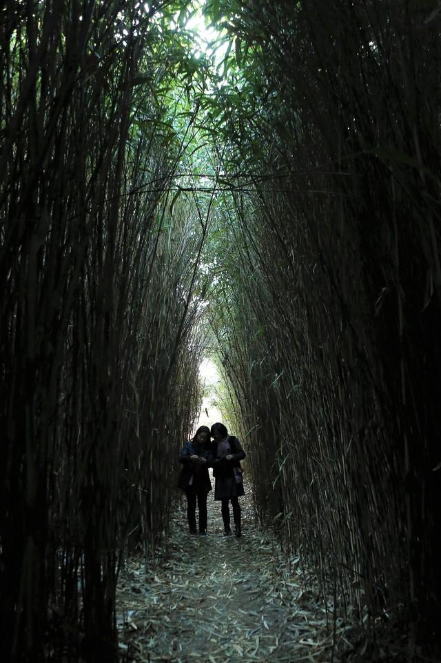 거제 구조라항 샛바람소릿길 시누대숲. 사진 이병학 선임기자
