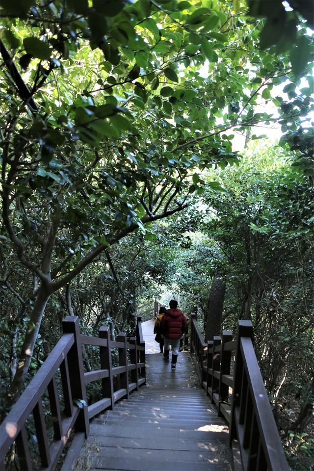 한겨울에도 푸른 숲길을 거닐 수 있는 거제 우제봉 난대림숲. 사진 이병학 선임기자