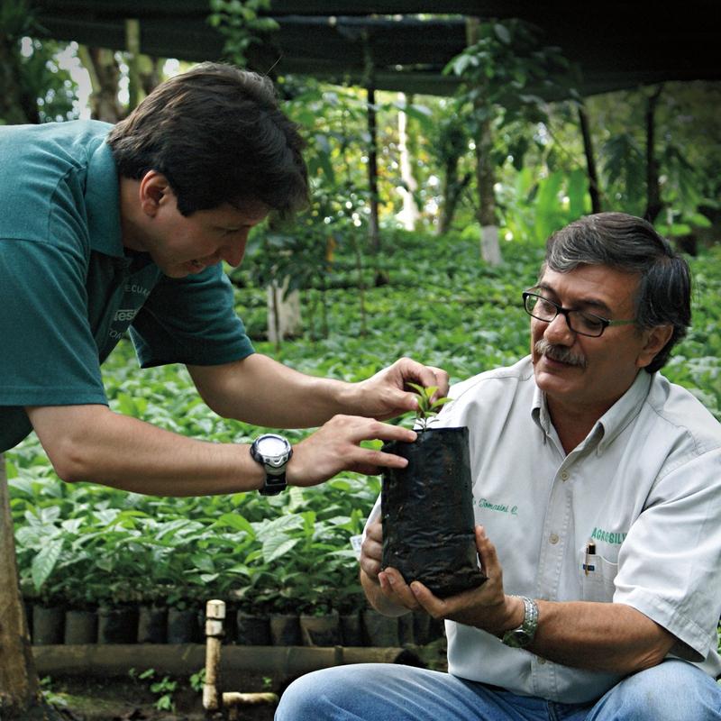 네슬레의 농학자들이 커피 묘목을 살펴보고 있다. 네슬레의 농학자들은 다수확 묘목을 얻기 위해 연구개발을 하고, 여기서 얻은 기술을 다시 농민들에게 전파하고 있다. 네슬레 제공